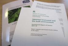 Invasive knotweed report