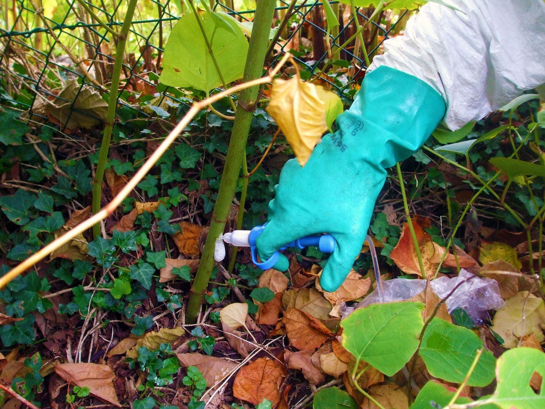 Herbicide-Treatment-Stem-injection